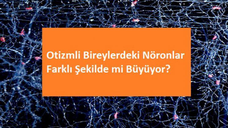 Otizmli Bireylerdeki Nöronlar Farklı Şekilde mi Büyüyor?