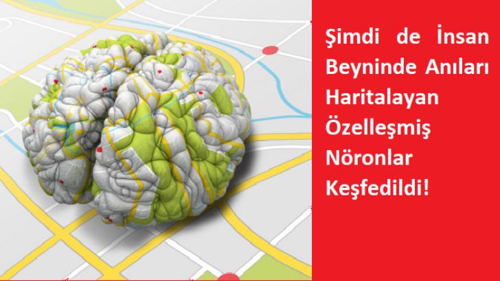 Anıları Haritalayan Özelleşmiş Nöronlar Keşfedildi!